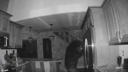 Ce se întâmplă când îți intră un urs în casă. O familie a pățit-o – VIDEO