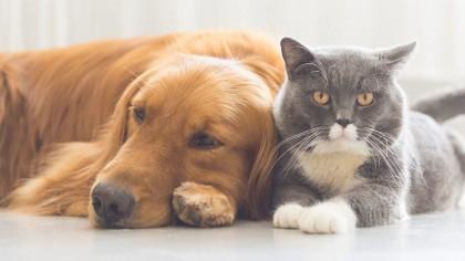 Izolare inedită: în Australia se adoptă animale de companie